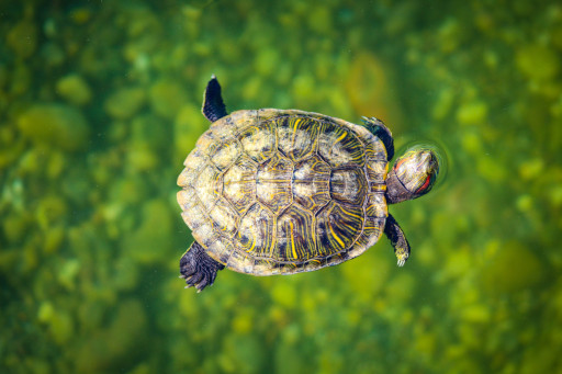 turtlefloat